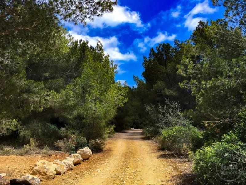 Unsere liebsten Strände auf Mallorca: Cala Cap Falco