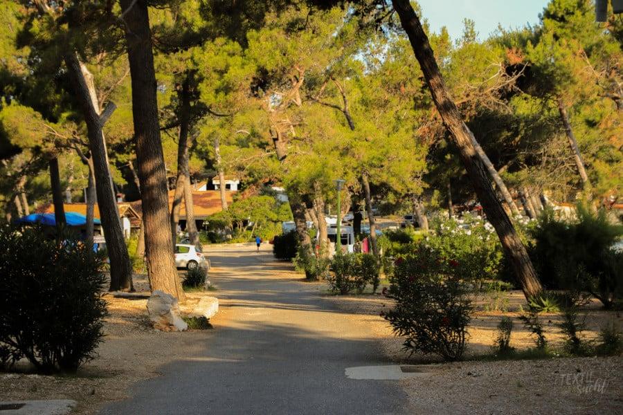 Camping Poljana: Stellplätze unter Pinien