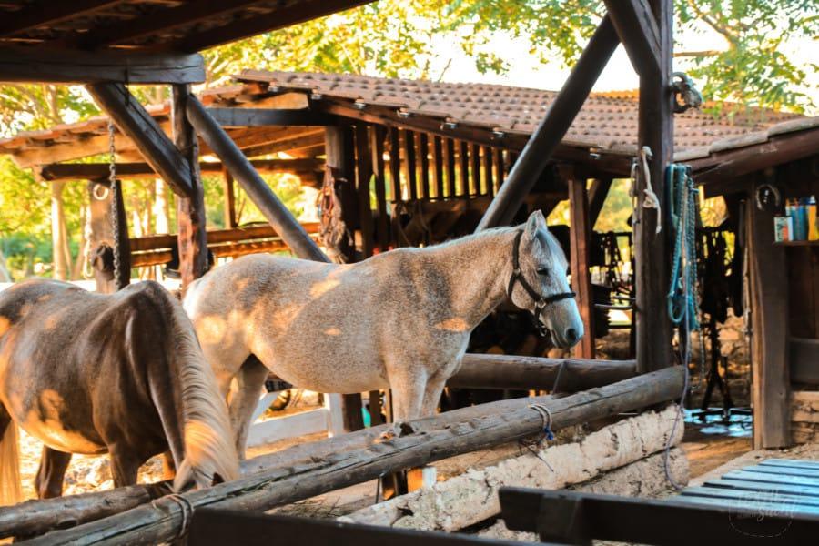 Pferderanch Camp Dvor